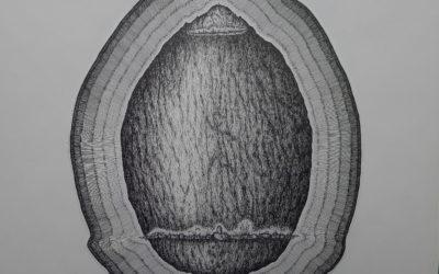 FRA PAI 02_Pomme de terre en menhir