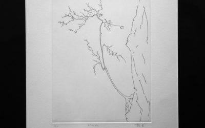 FRA NAC 06_L'arbre