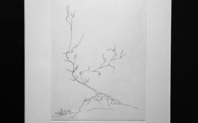 L'arbre 2