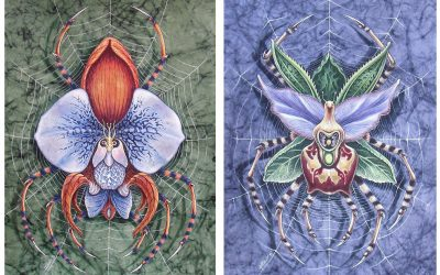 Orchnides Colombae Velum et Cornelius Crabae